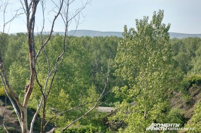 Памятник природы «Кузнецкий» расположен недалеко от Кузнецкой крепости.