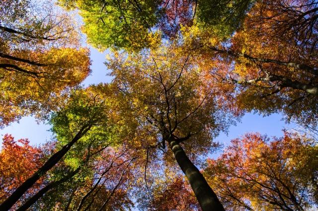 Насладитесь атмосферой осеннего леса.