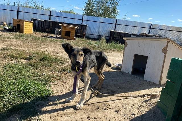 Местная знаменитость - Бухенвальд. Истощенный пес с должным уходом смог встать на лапы.