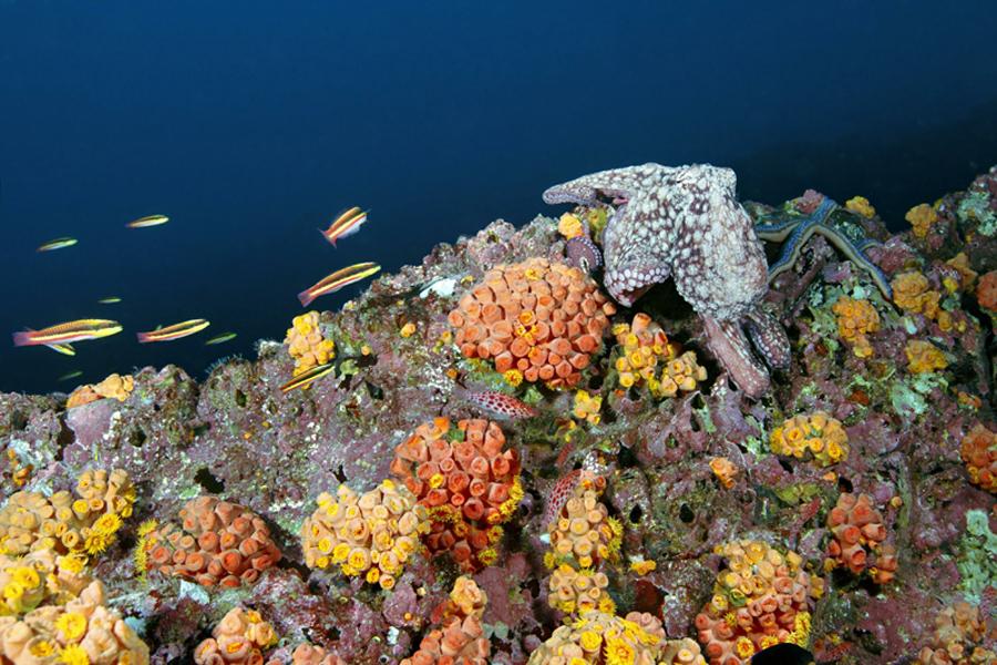 Подводная фауна океана