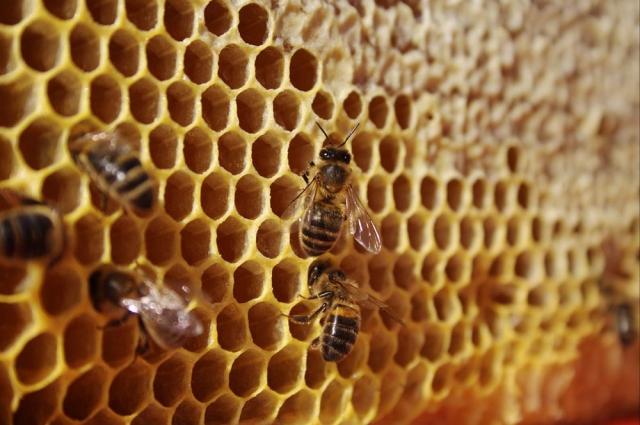 В преддверии медового спаса возрос спрос на продукты пчеловодства.