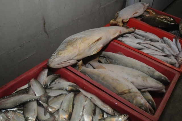 Рыба омского производства.