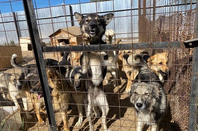 Собак приводят как и простые жители, так и отлов