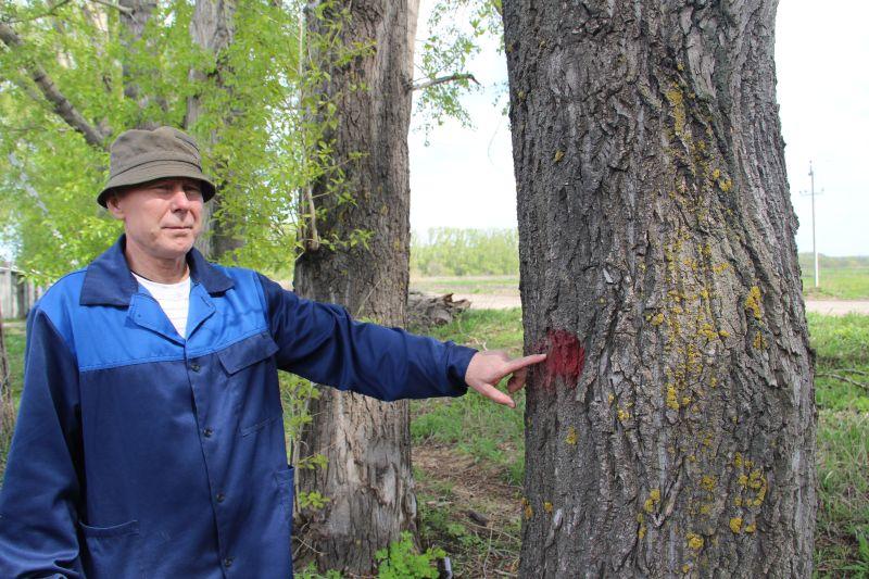 Отмеченные деревья обещали обрезать «до майских»
