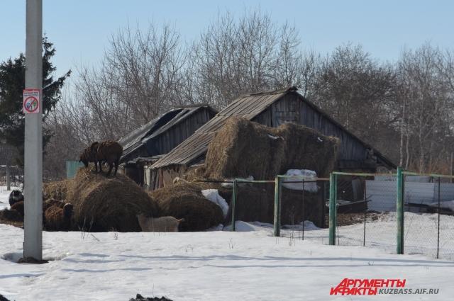 Треща - село небогатое, раньше многие держали коров. Но сейчас скотина не всем по карману.