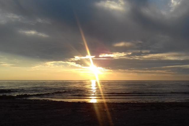 Берег залива в Сестрорецке будет укреплен.
