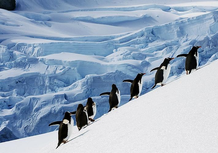 Фотовыставка Юрия Шепеты «Антарктика. Архипелаг «Аргентинские острова