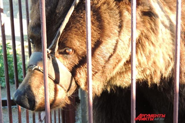 Медведь Егор сегодня хоть слабо, но видит