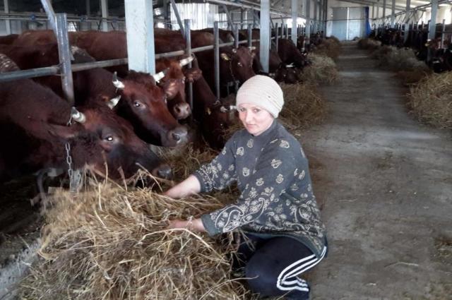 Выноска: Десять миллионов рублей вложили  в СПК «Русь» в реконструкцию двух ферм.
