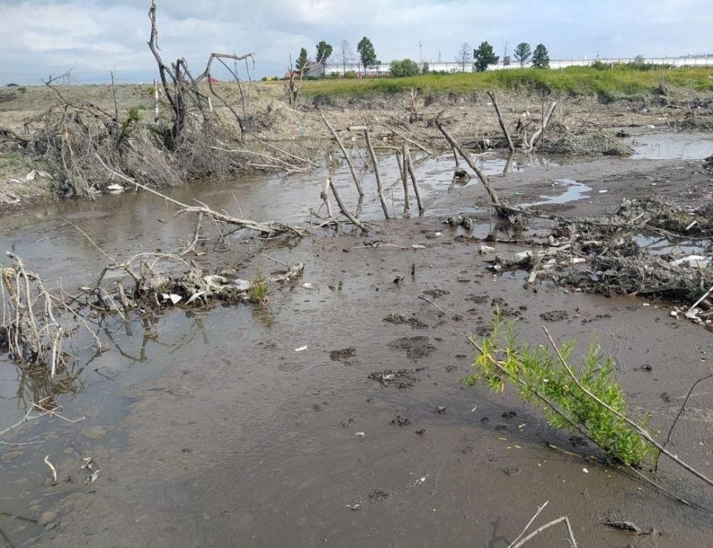 Из-за грязных стоков погибли деревья.