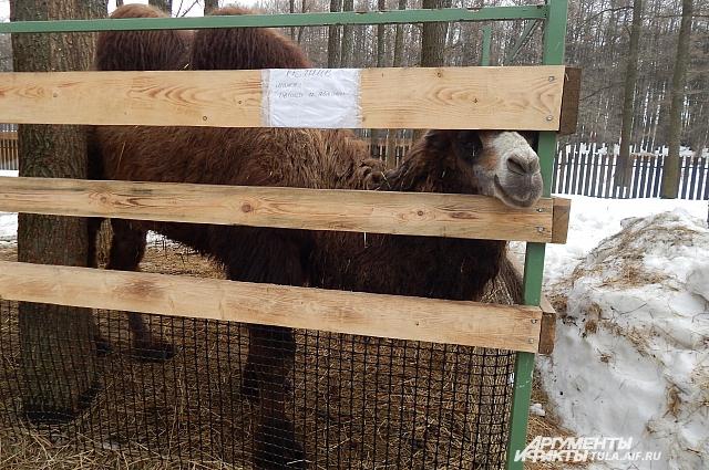 Питомцы зоопарка любят пообщаться с посетителями.