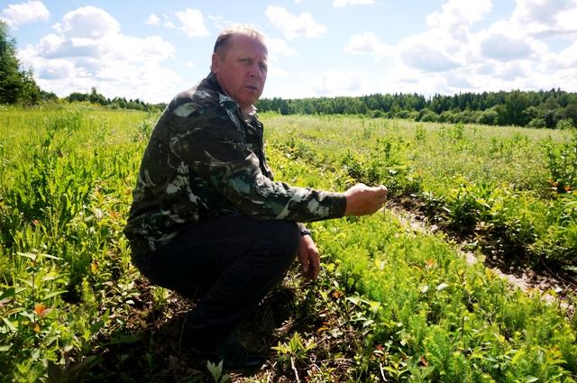 Директор «Лесной охраны» Александр Баланцев: Восстанавливать леса, выращивать для этого посадочный материал - это не просто святое, а еще и перспективное дело, поэтому и здесь мы прилагаем максимум усилий.