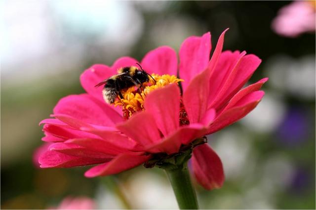 Яркий цветок в саду Елены Костенко.