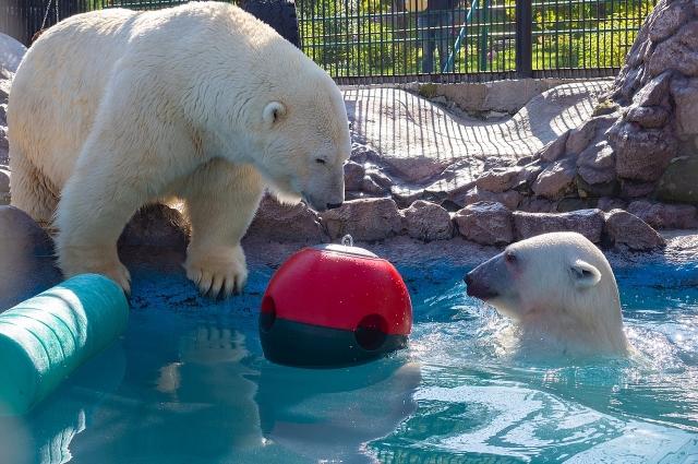 Животные устроили игры в бассейне.
