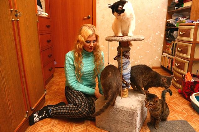 Волонтёры помогают и кошкам, и собакам.
