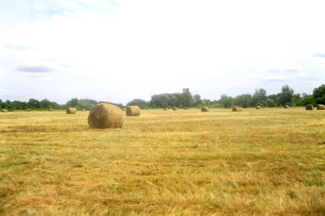 Сенокос в Иловлинской пойме длится большую часть лета.