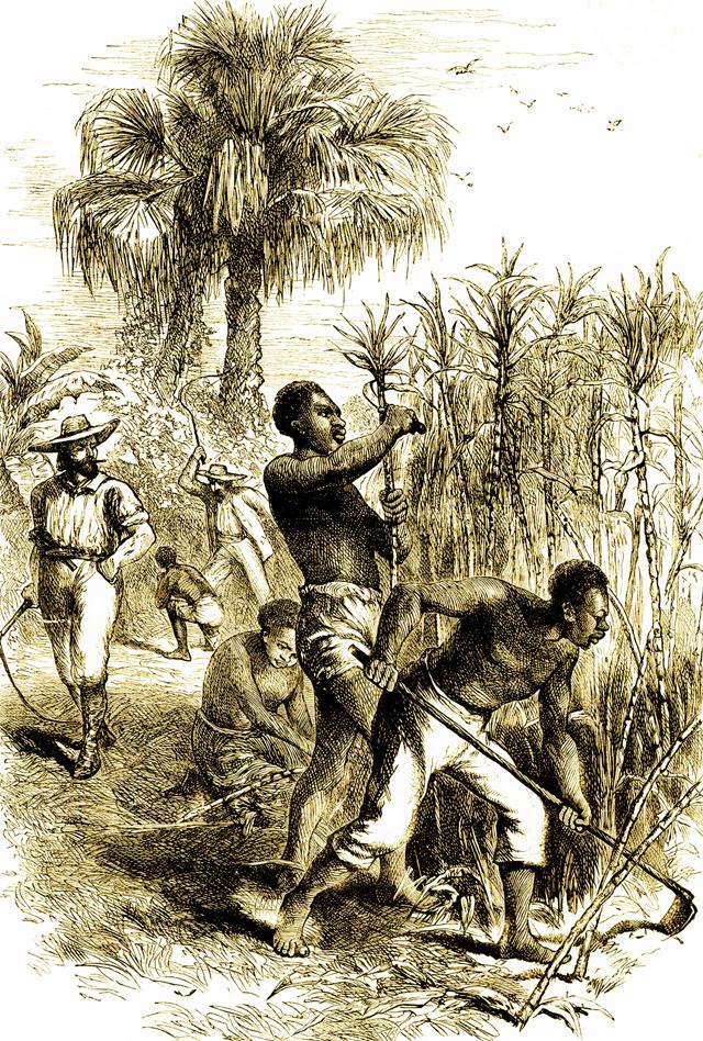 Американская плантация 1784 года.