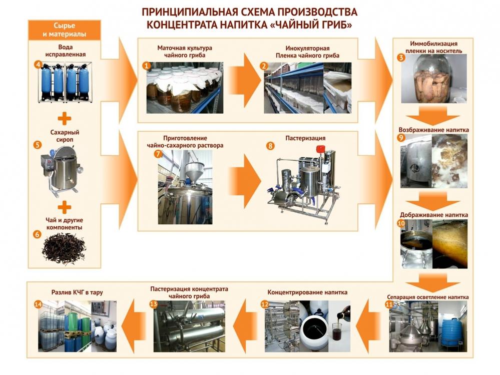 Полный цикл производства напитка из чайного гриба.