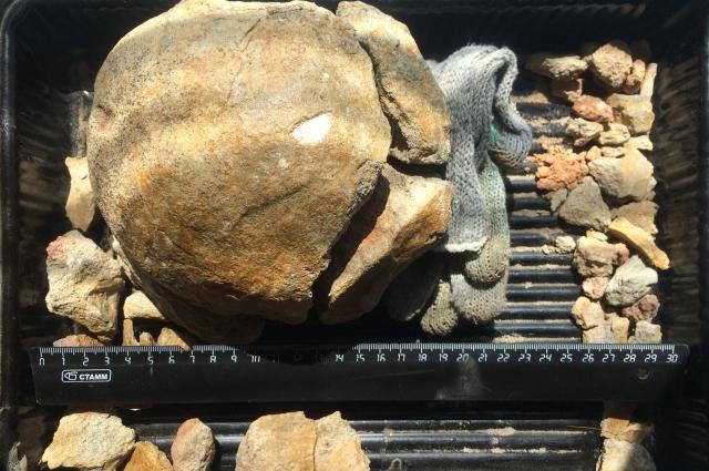 Пока не ясно, кому принаджелала окаменевшая кость около 120 млн лет назад.
