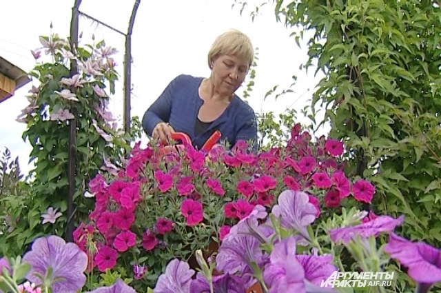 Светлана Квашнина выращивает потрясающие петунии.
