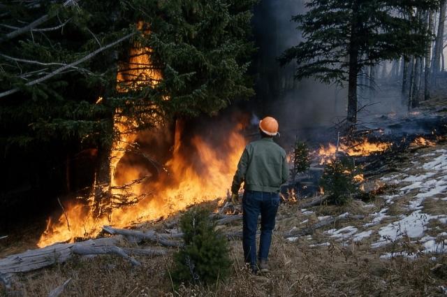 Лесные пожары тушить очень сложно.