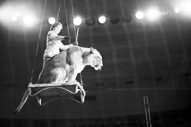 Ирина Бугримова и лев под куполом цирка на качелях. Большой Московский цирк на проспекте Вернадского. 1968 год