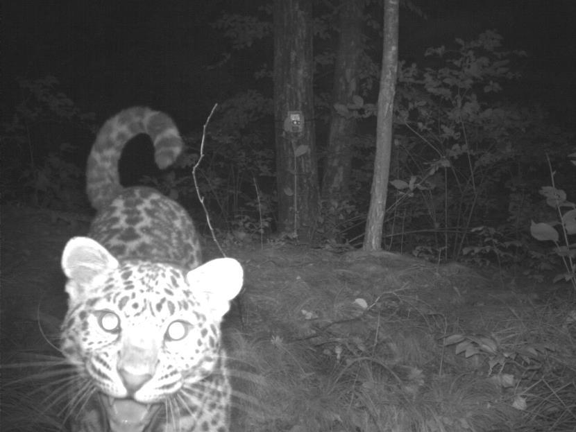 Леопардом Leo 82Un.