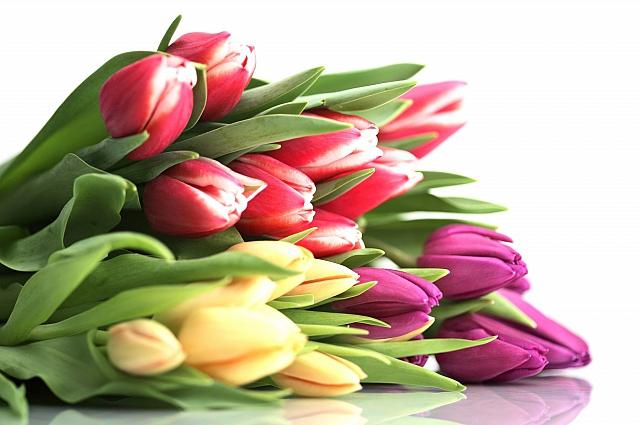 Тюльпаны - выбор многих в праздник.