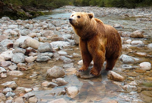 Медведи здесь встречаются часто.