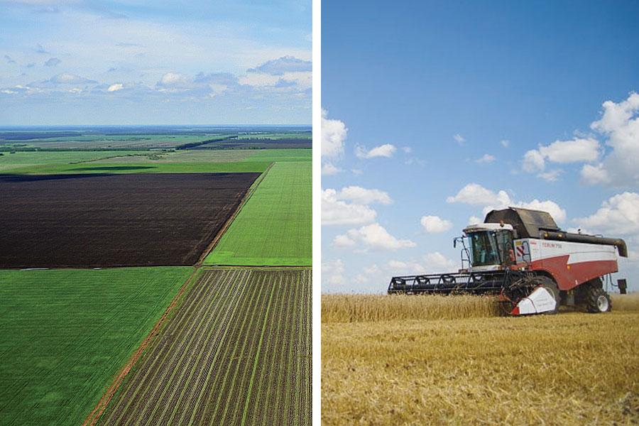 Сегодня в структуре посевных площадей яровых и озимых зерновых — 4000 гектаров