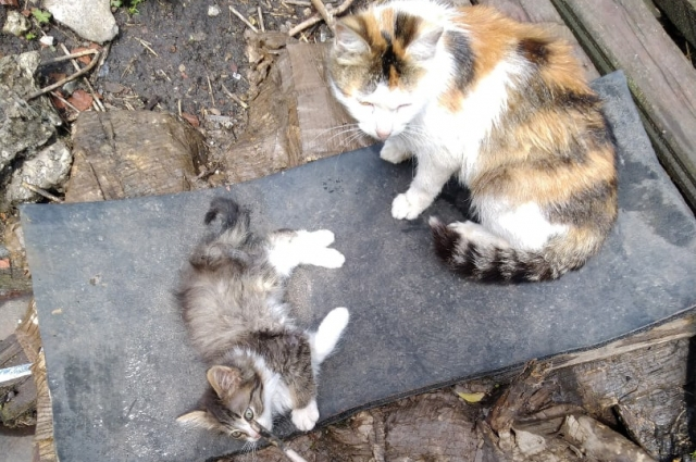 Котята в поселке Товарковский.