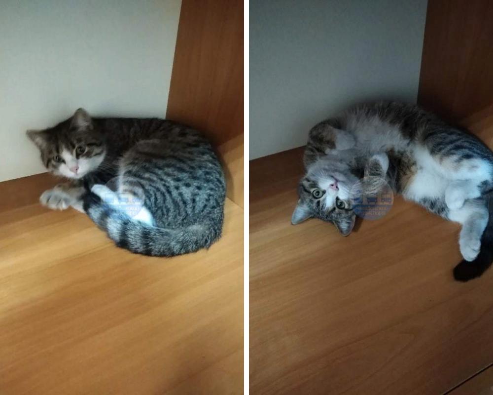 Кошка оказалась очень ласковой.