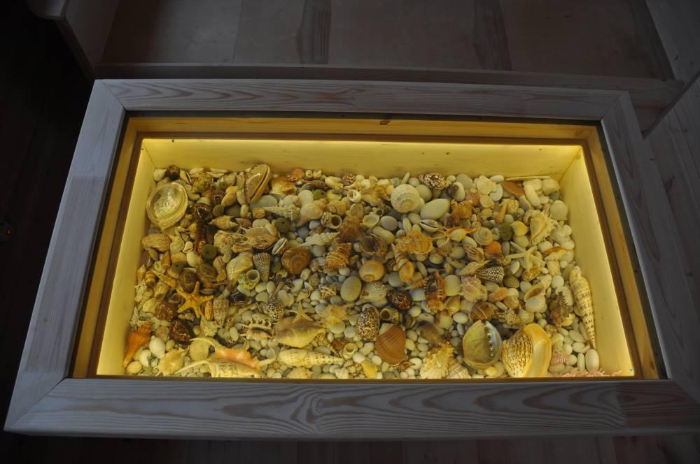 Коллекция ракушек встолешнице. Витрина этого домашнего музея вместит любые экспонаты.