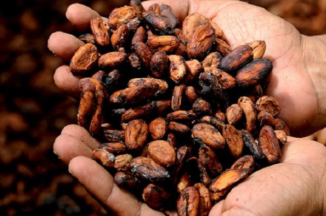 Обжаренные какао-бобы.