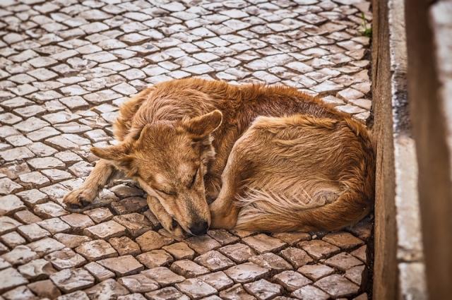 Бездомные животные есть во всех городах..