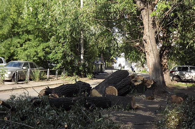 В городе планируют пустить под пилу около 600 взрослых деревьев.