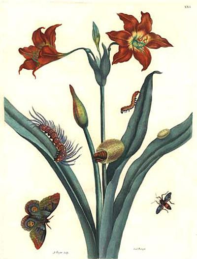 Мария Сибилла Мериан. Метаморфозы суринамских насекомых.