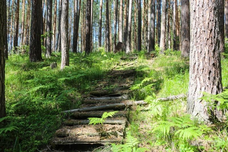 В лесу еще гниют останки деревянных конструкций