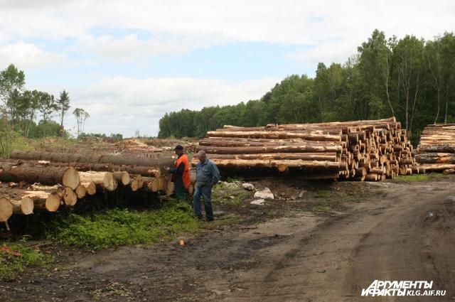 Вырубка лесов идет в промышленном масштабе.