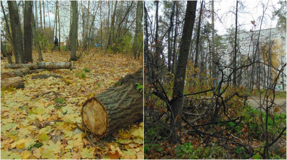 Лесопарковые зоны оказались бесхозными – местами заросли, а местами их вырубают.