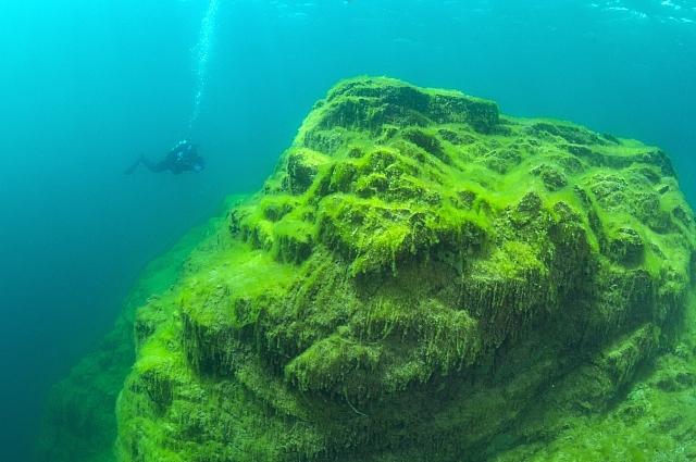 Пока Байкал заражен спирогирой только на мелководье