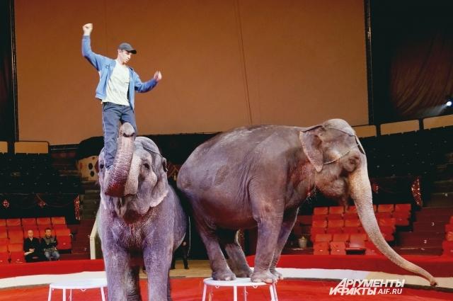 На репетиции в пермском цирке.