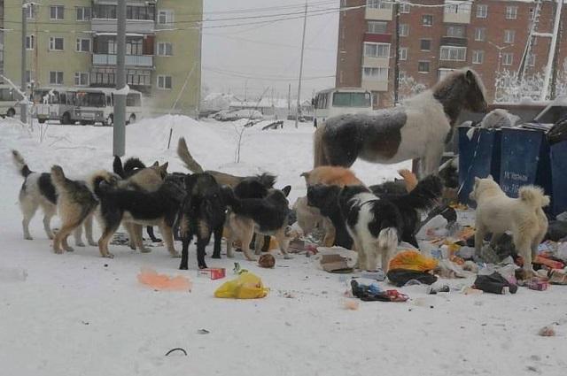 Лошадь ест помои наравне с бродячими собаками.