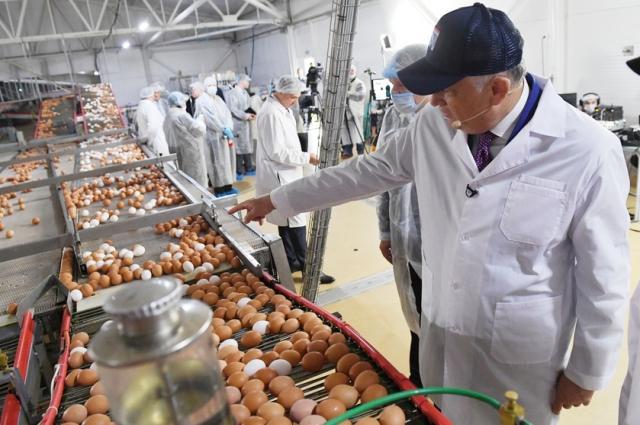 Сегодня Ленобласть на первом месте по производству яиц.