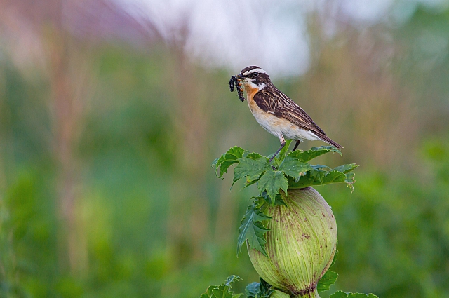 В нашем регионе наблюдение за птицами в качестве досуга привлекает чаще всего фотографов.