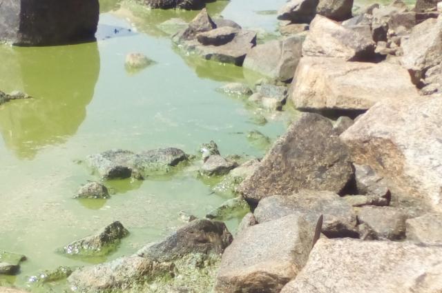 Водоёмы Нижнего Тагила не чистились десятки лет.