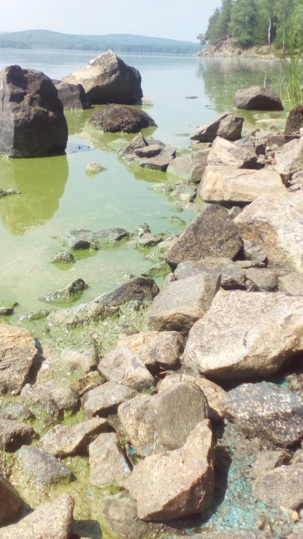 Стремительное обживание водорослями Черноисточинского пруда обусловлено его загрязнением продуктами жизнедеятельности человека.