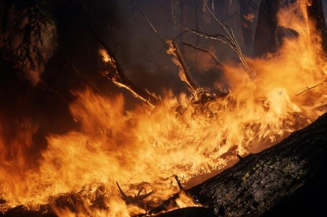 Пожар в Ершичском районе стал самым крупным в регионе за последние несколько лет - пламя тушили двое суток.