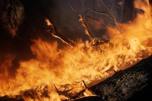 В этом году за нарушение требований пожарной безопасности, повлекшее возникновение пожара к административной ответственности, были привлечены около 50 омичей, к уголовной – двое.