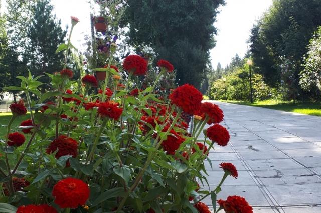 Дендрологический сад заложен в 1948 году по проекту А.А. Ануфриева как парково-оранжерейное хозяйство.
